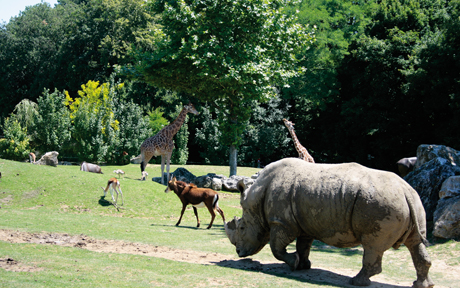 top_Savane2_ZooParc_de_Beauval